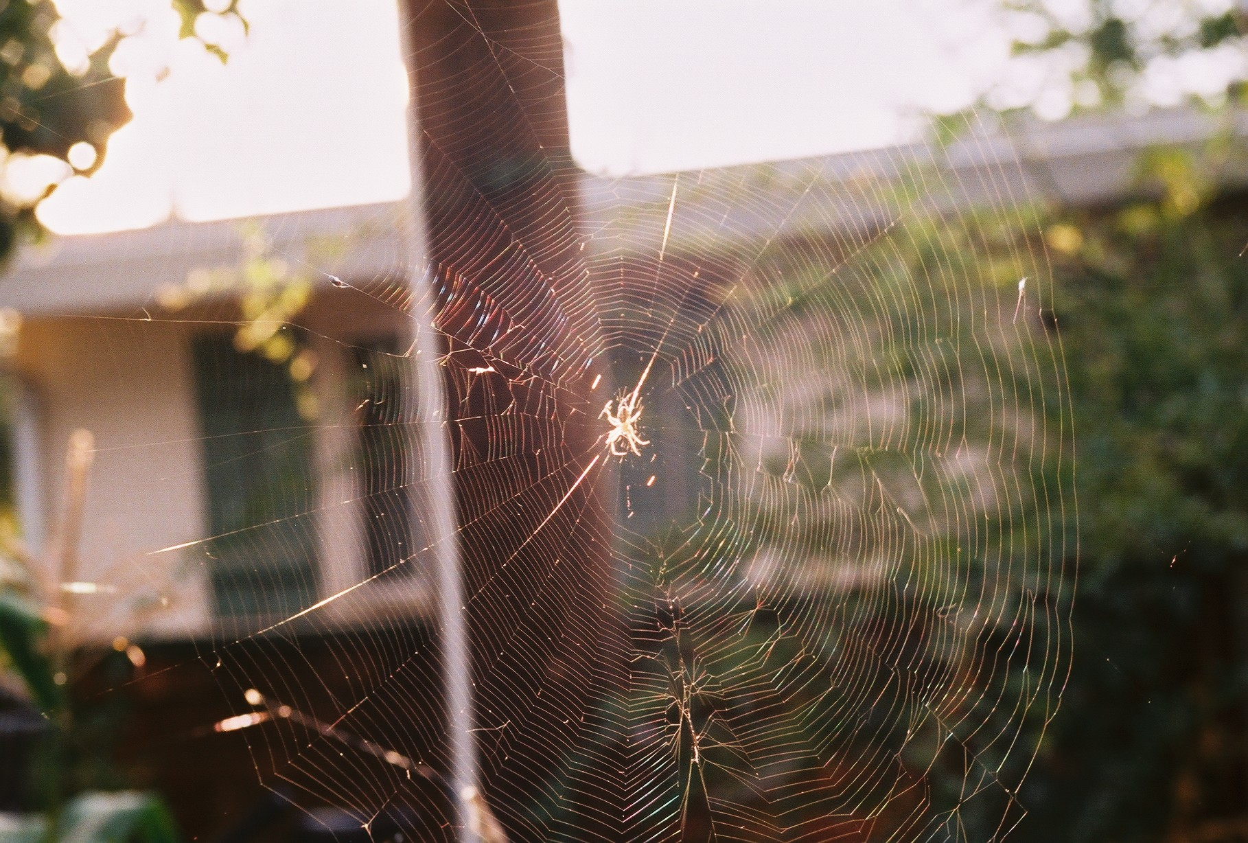 Another spider web