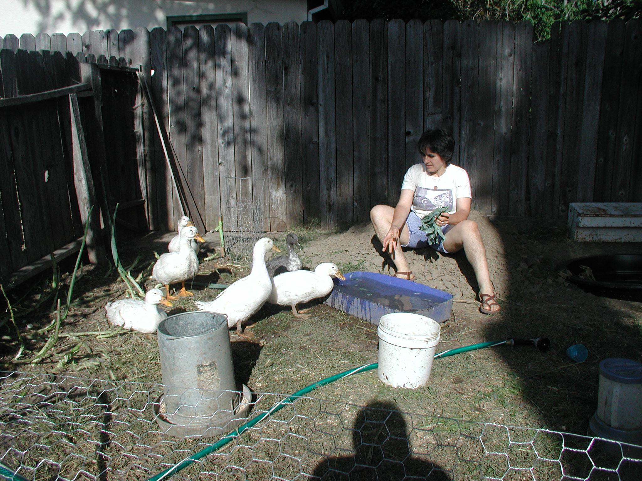 Feeding the ducks, June 2007